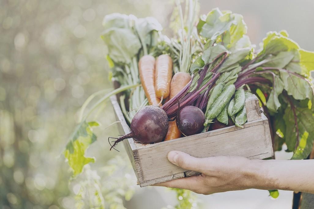 <strong><a href='https://zdravbud.net/new/bessolevaya-dieta-menyu-plyusy-i-minusy'>овощи</a></strong> экологически чистые продукты
