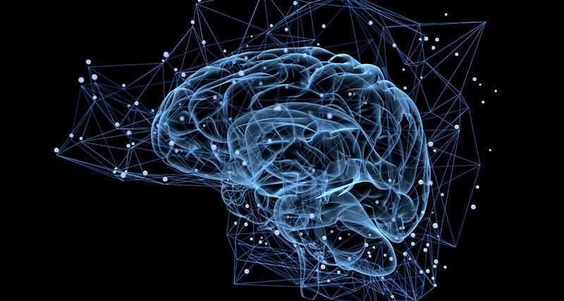 влияние эмоций на мозг