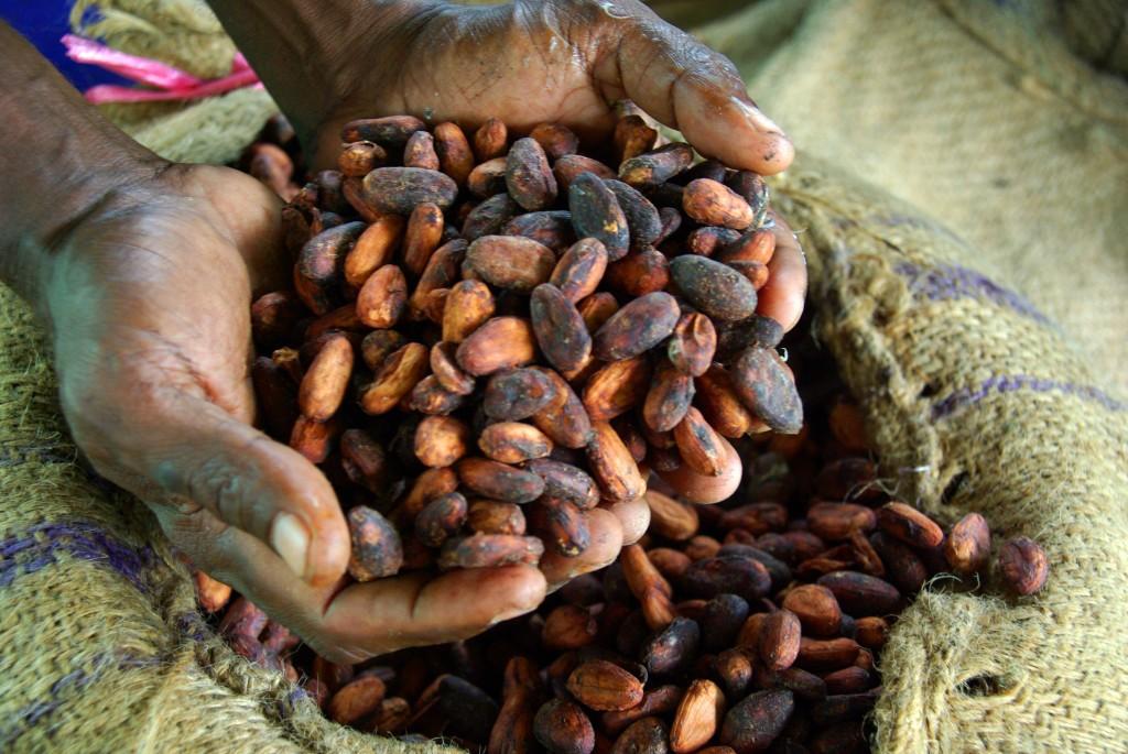 какао-бобы горсть