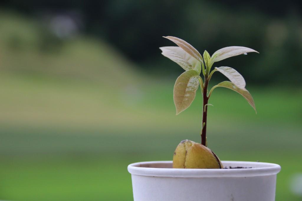 авокадо декор